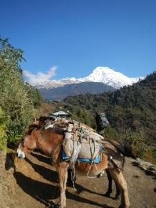 Donkey train.